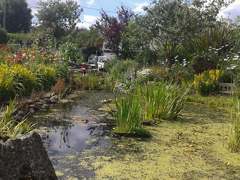Scotland's Gardens Scheme Open Garden: 39 Nantwich Drive