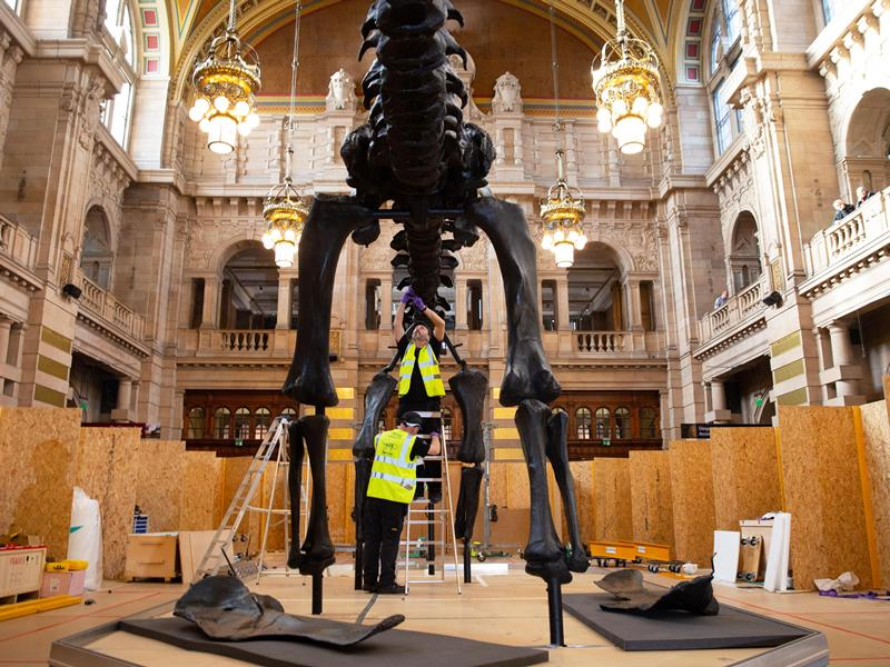 Come and see Dippy, the iconic dinosaur, taking shape at Kelvingrove