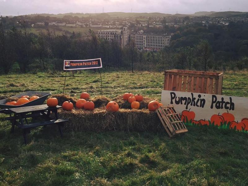 Barrhead Pumpkin Patch