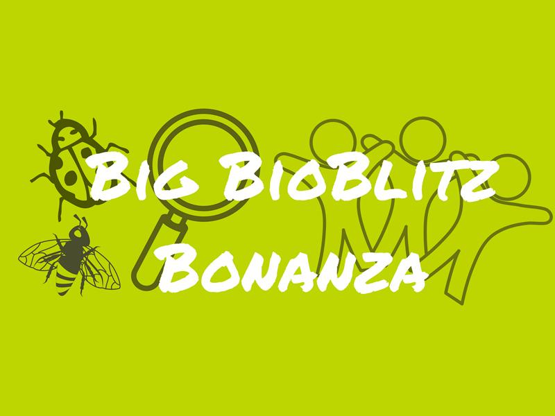 Big Green Weekend BioBlitz Bonanza