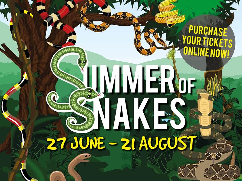 Summer of Snakes at Deep Sea World