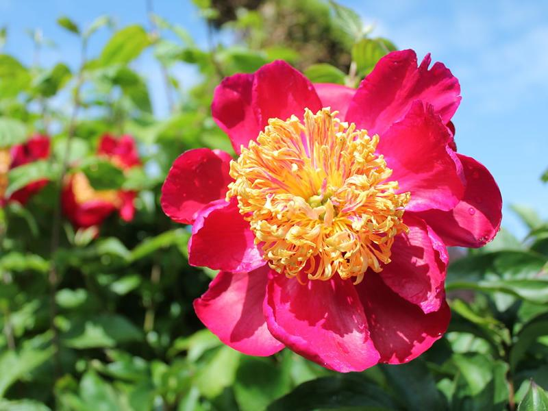 Scotland's Gardens Scheme Open Garden: The Hidden Gardens