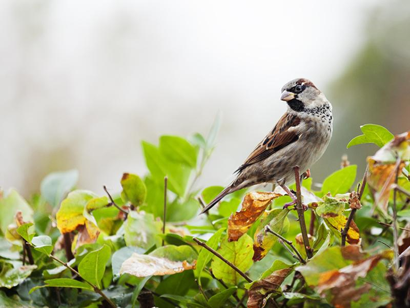 Dobbies teams up with the RSPB for latest podcast episode