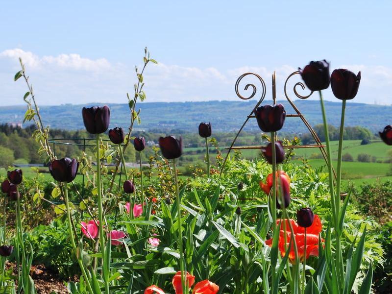 Scotland's Gardens Scheme Open Garden: Wraes