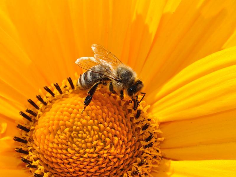 Brilliant Buzzing Bees
