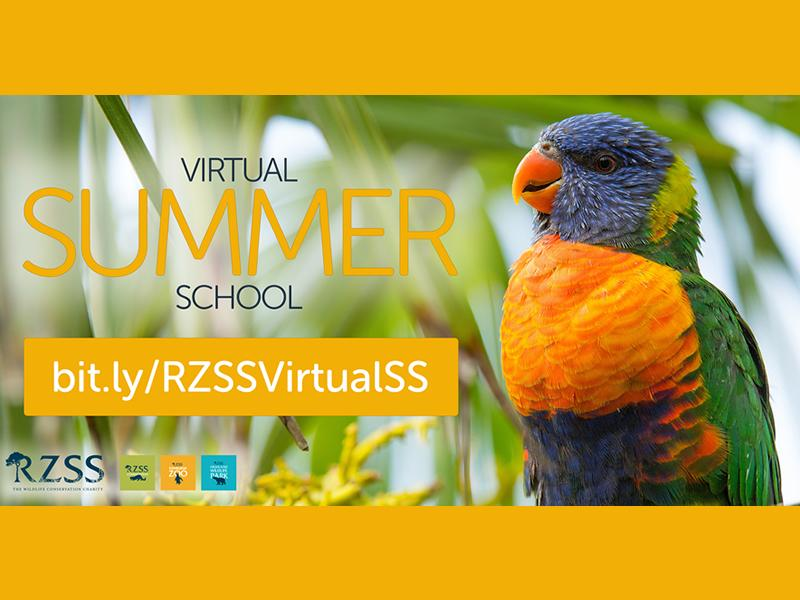 RZSS Virtual Summer School