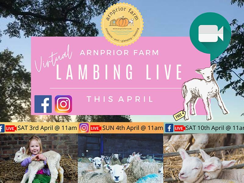 Arnprior 'Virtual' Lambing Live