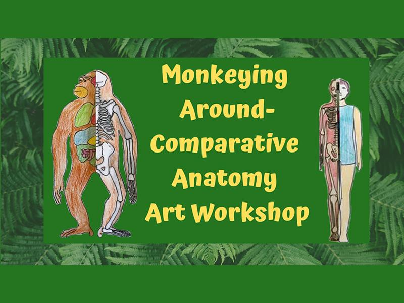Monkeying Around- Comparative Anatomy Art Workshop