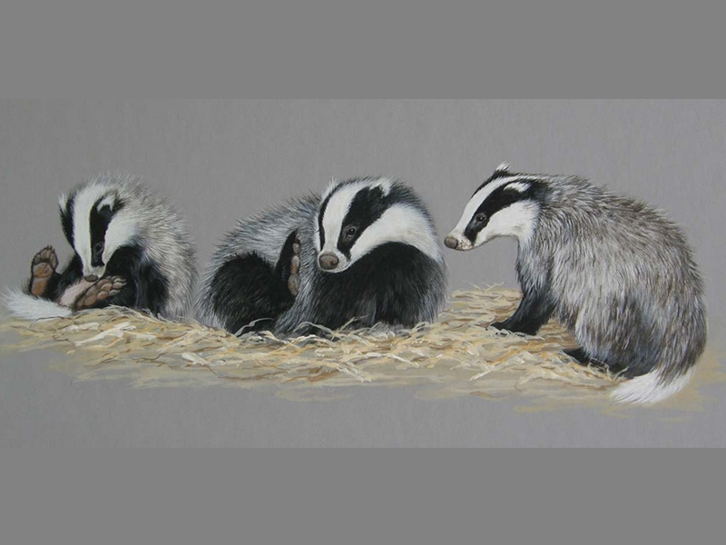 Charity invites wildlife artists to come together to help Scotlands animals