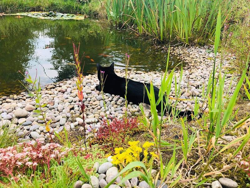 Scotland's Gardens Scheme Open Garden: Gardens of the Highest Villages