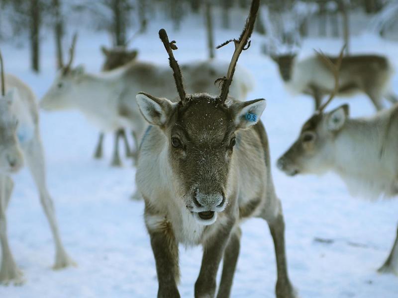 'Magic of Lapland' Nature Talk