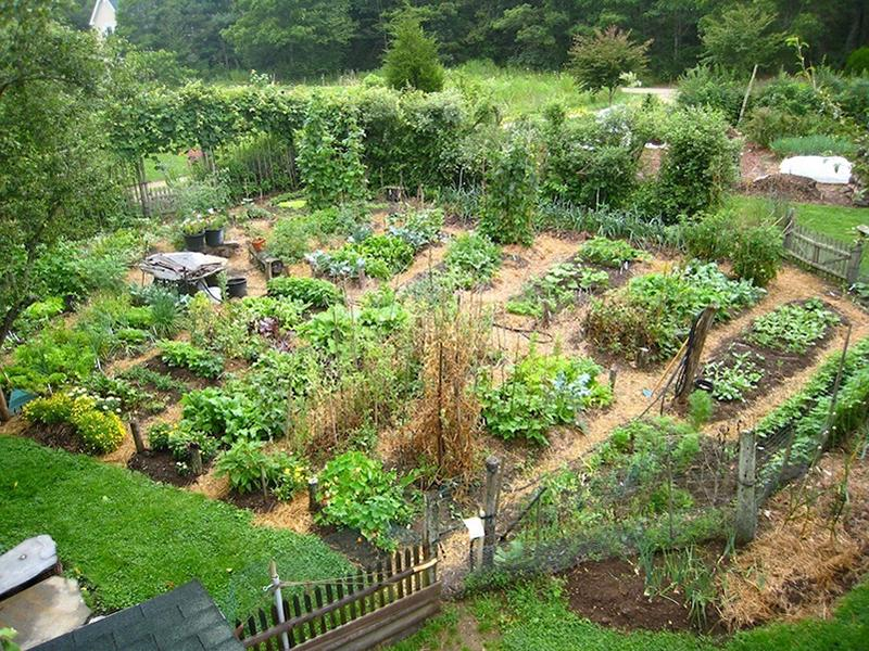 Virtual workshop: Permaculture - the future of food production?