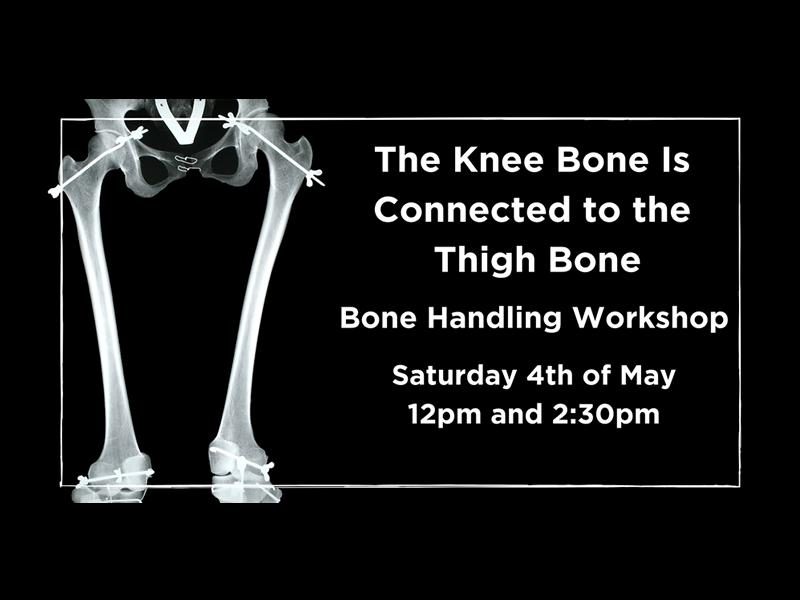 The Knee Bone is Connected to the Thigh Bone: Bone Handling Workshop