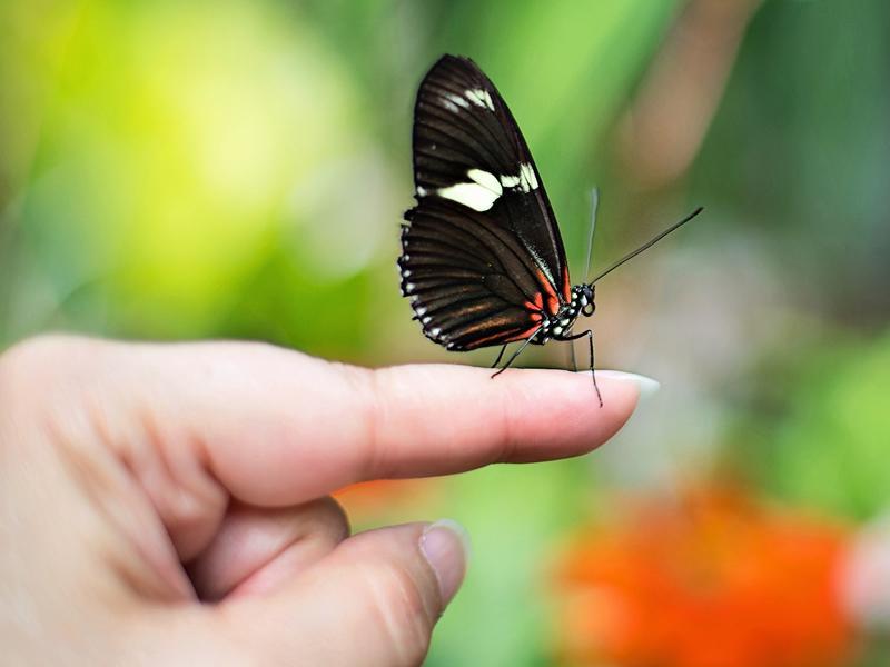 Biodiversity on Earth: World Environment Day Free Webinar