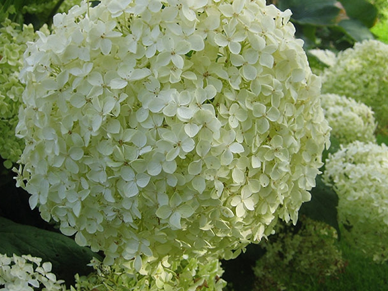Kilmacolm Plant Sale