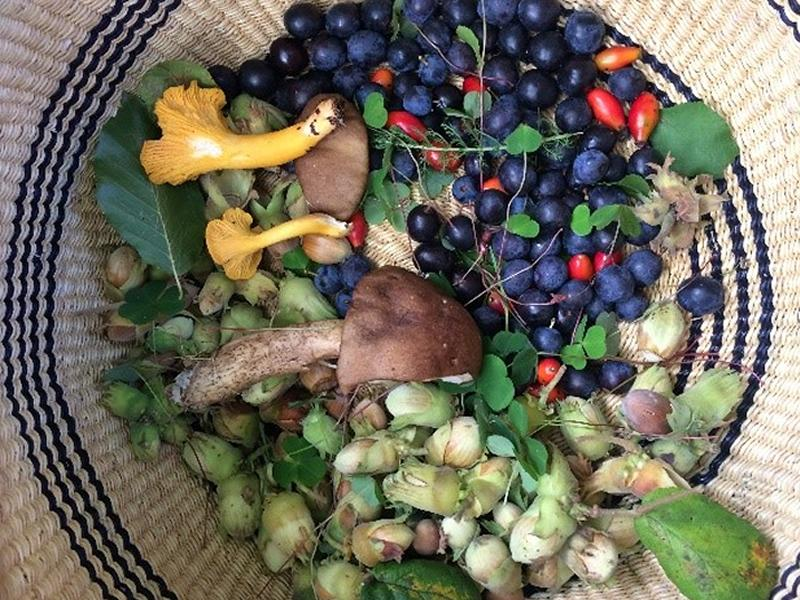 New Foraging Festival encourages people to explore Scotland