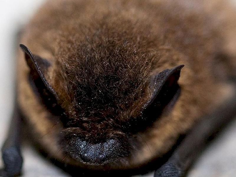 Go Bats!
