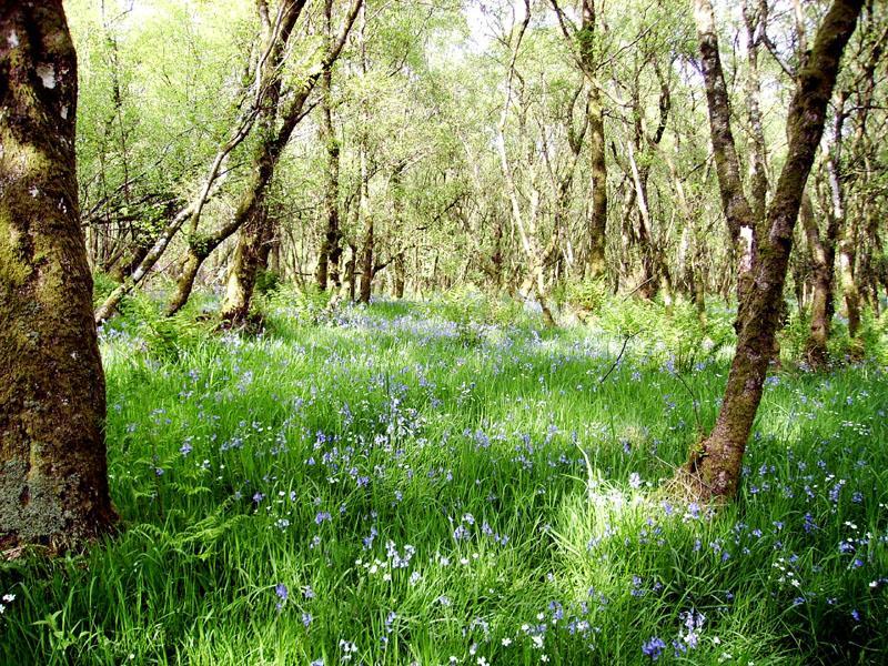 Scotland's Gardens Scheme Open Garden: Highwood