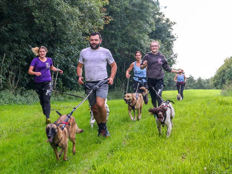 Cani-Fit Beginners Classes