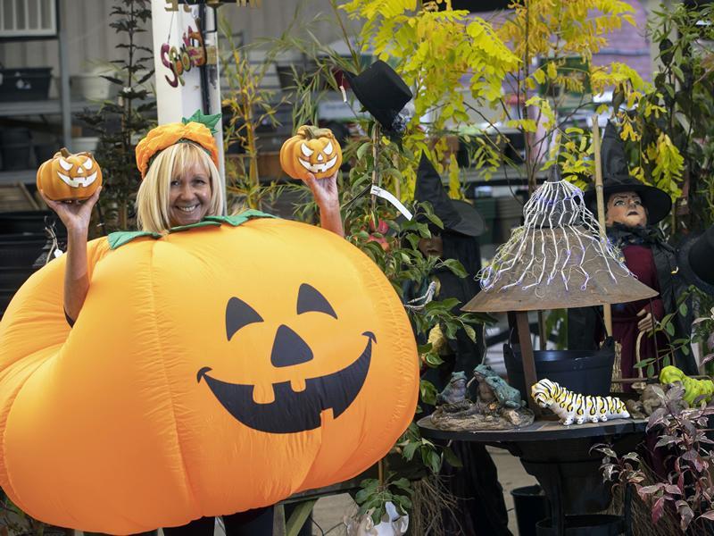 Big Halloween Pumpkin Trail