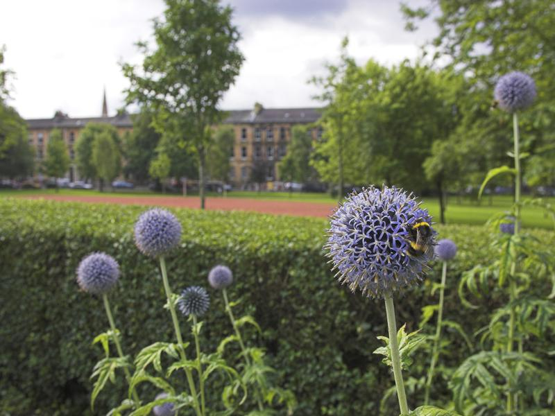Glasgow to Globe: how saving nature could save people and the planet