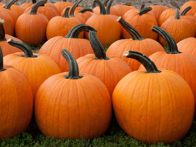 Clyde Valley Family Park Pumpkin Festival