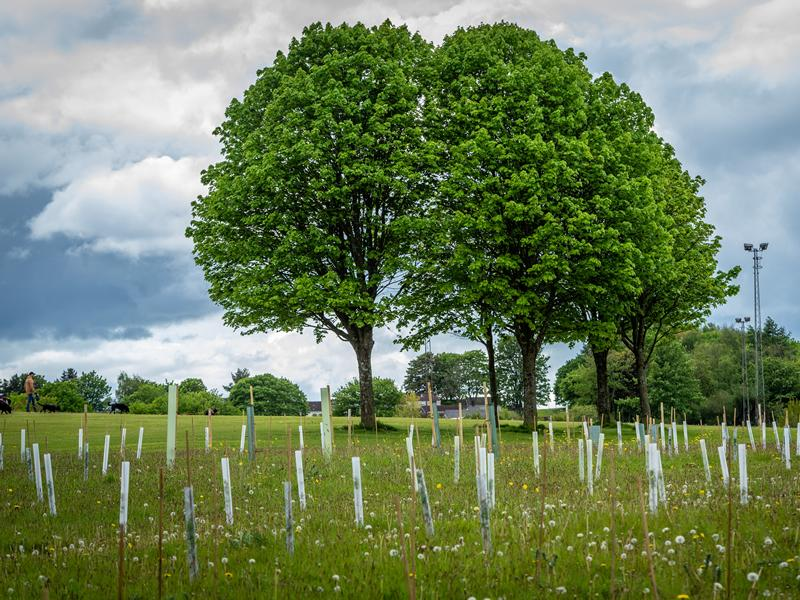 Plans launched to plant ten trees for every person in Glasgow City Region