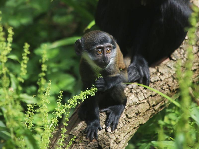 Baby monkey at Edinburgh Zoo named by keepers