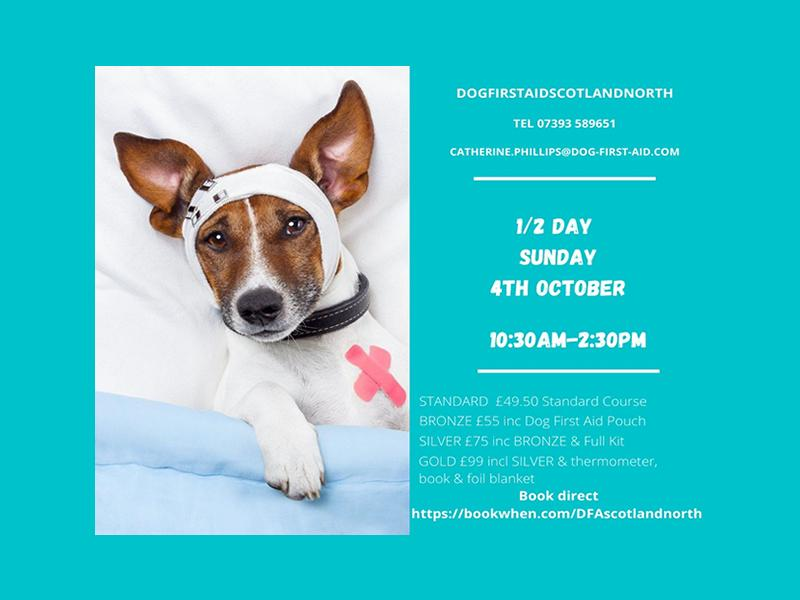 Dog First Aid: (LIVE) Half Day Emergency Canine Care Course