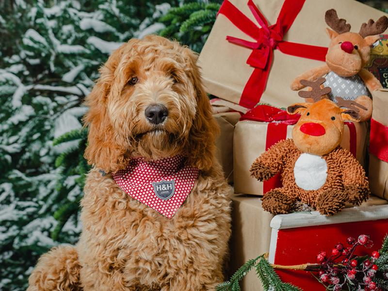 Leading garden centre creates ultimate Christmas treat for pets