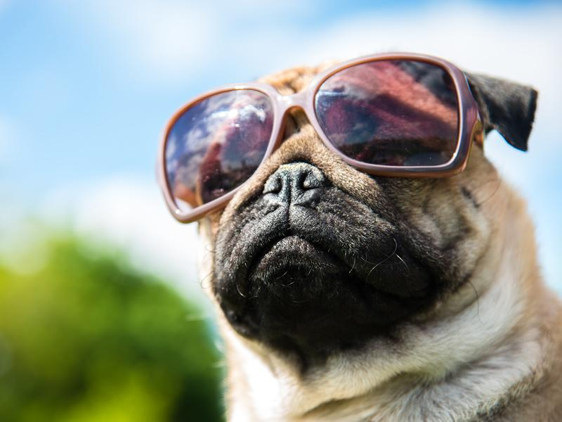 ACCORD Hospice Virtual Pet Show