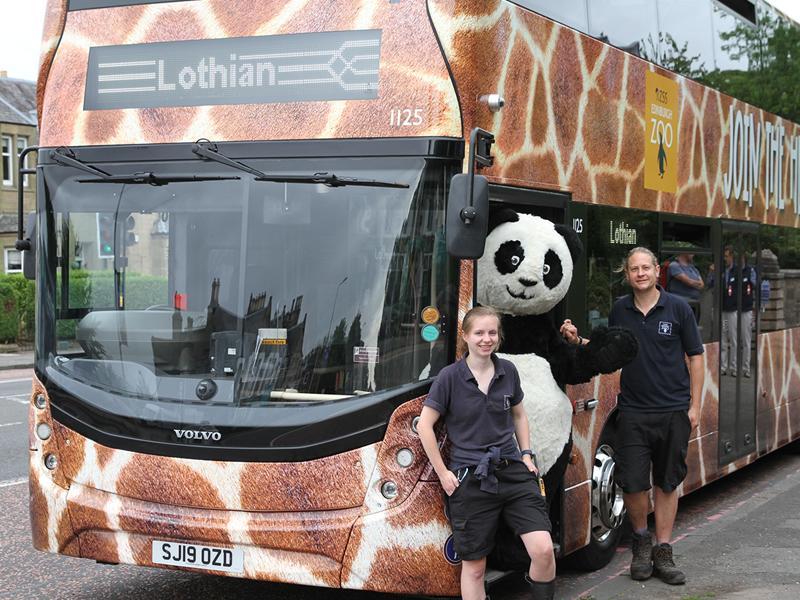 Giraffe print bus hits the streets of Edinburgh