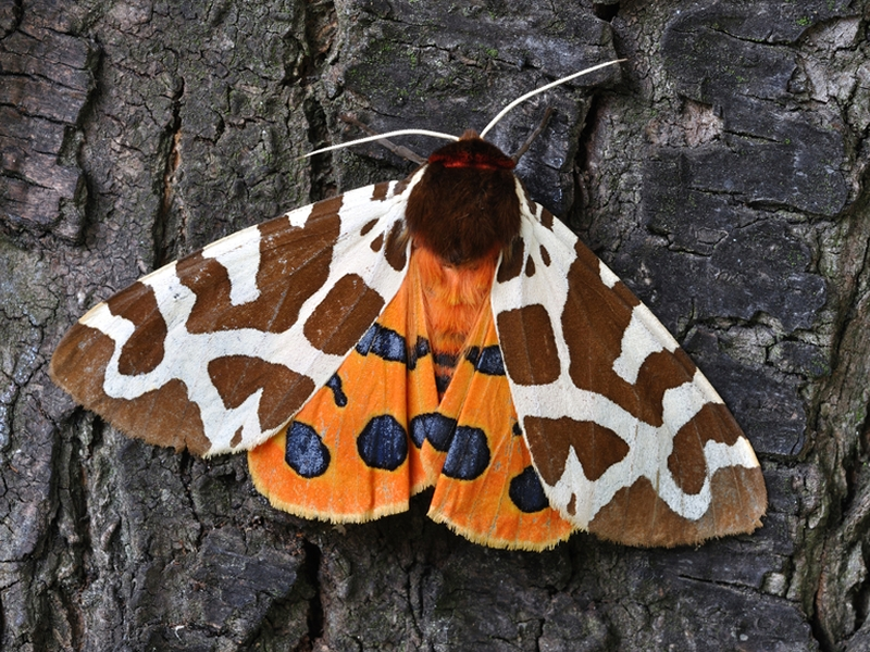 Summer Family Nature Club: Moths and Butterflies