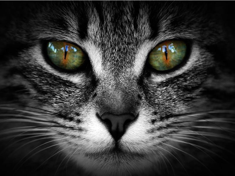 Scotia Cat Fanciers Cat Show and Craft Fair
