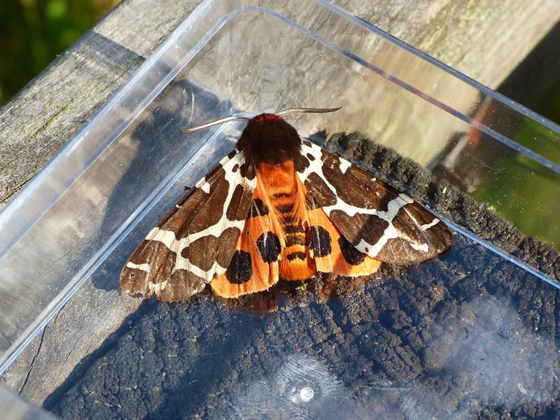 Moth Morning