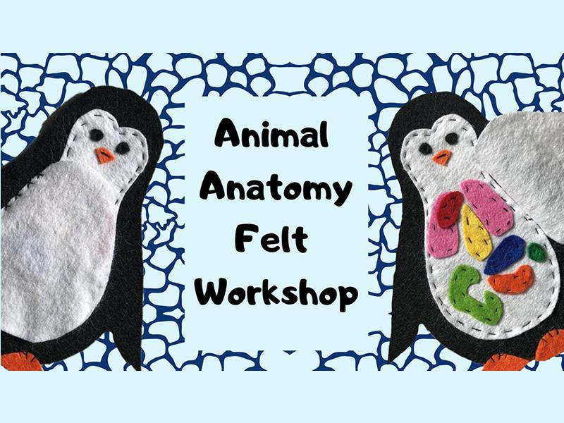 Animal Anatomy: Felt Art Workshop