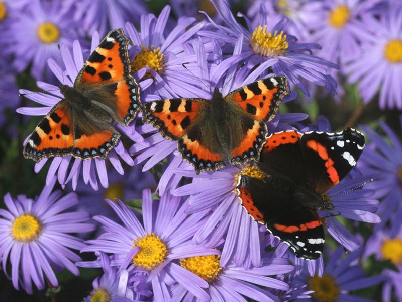 Dobbies teams up with Butterfly Conservation in its latest podcast episode