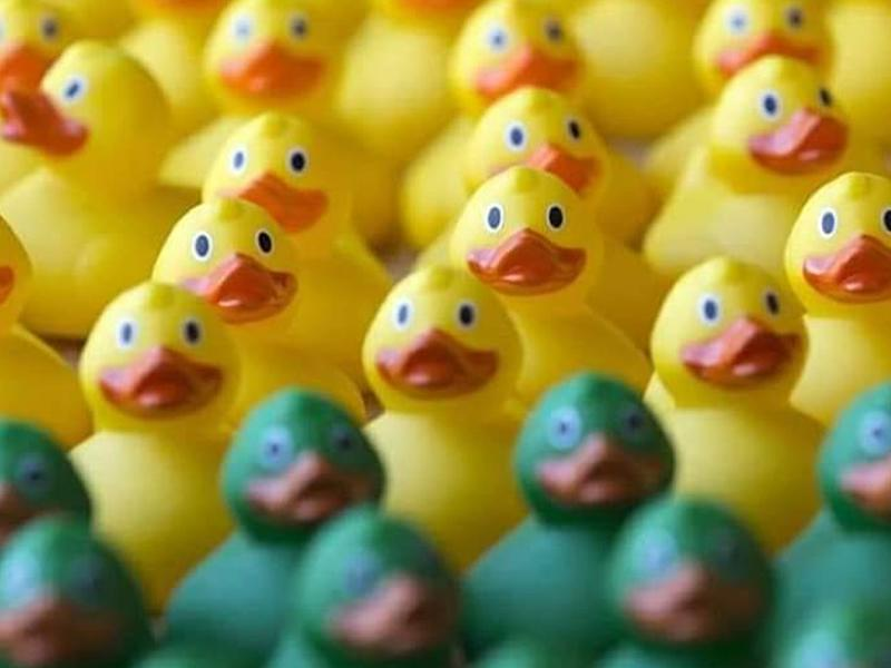 Easter Duck Race - CANCELLED