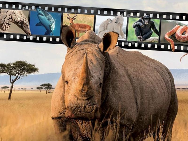 Wilderland Wildlife Film Festival - POSTPONED