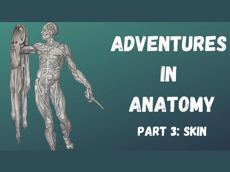 Adventures in Anatomy Part 3: Skin