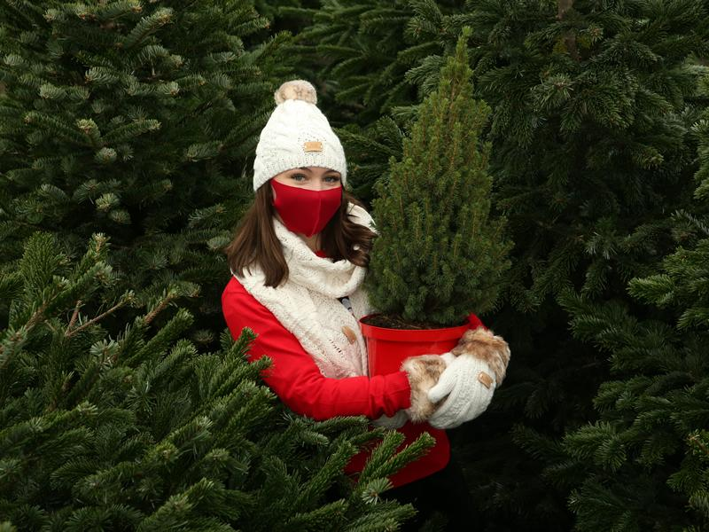 Dobbies moves Bring your Christmas Tree Home Day as Brits seek early festive joy