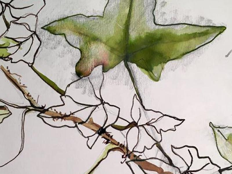 Plants in Ink