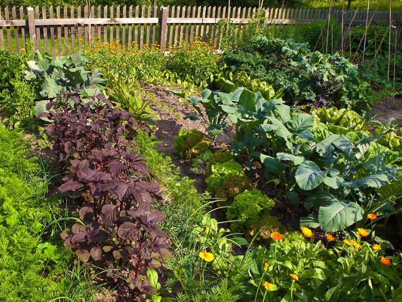 Doors Open Days: West End Growing Grounds Association