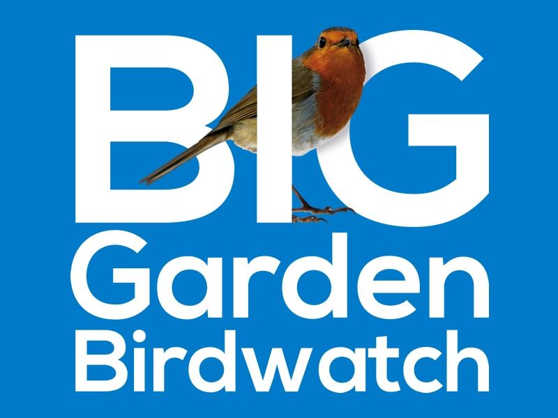 Get ready for the Big Garden Birdwatch! - CANCELLED