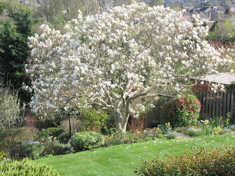 Scotland's Gardens Scheme Open Garden: 101 Greenbank Crescent