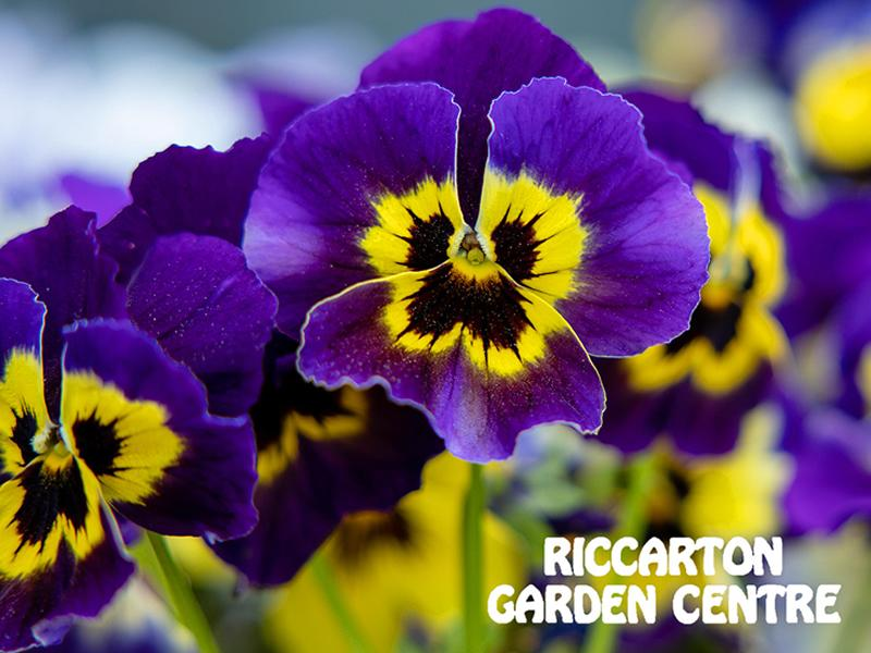 Riccarton Garden Centre and Coffee Shop