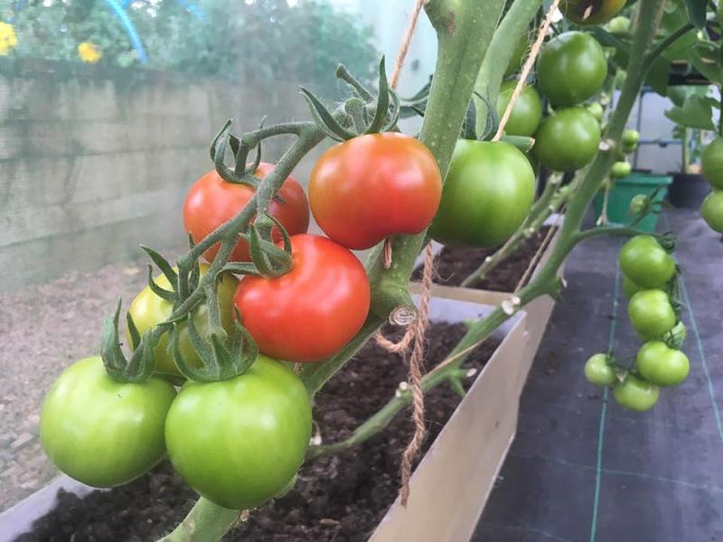 How To Grow Your Own Veg, Fruit & Herbs At Home