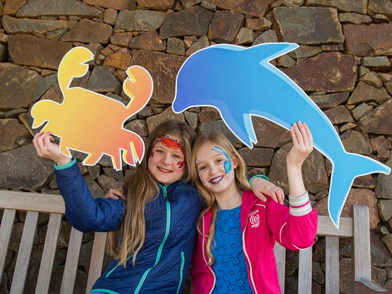 Scottish Seabird Centre to open its doors for free during World Ocean Day