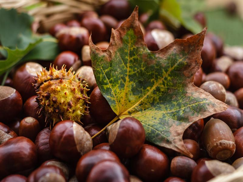 Bonkers about Conkers - CANCELLED