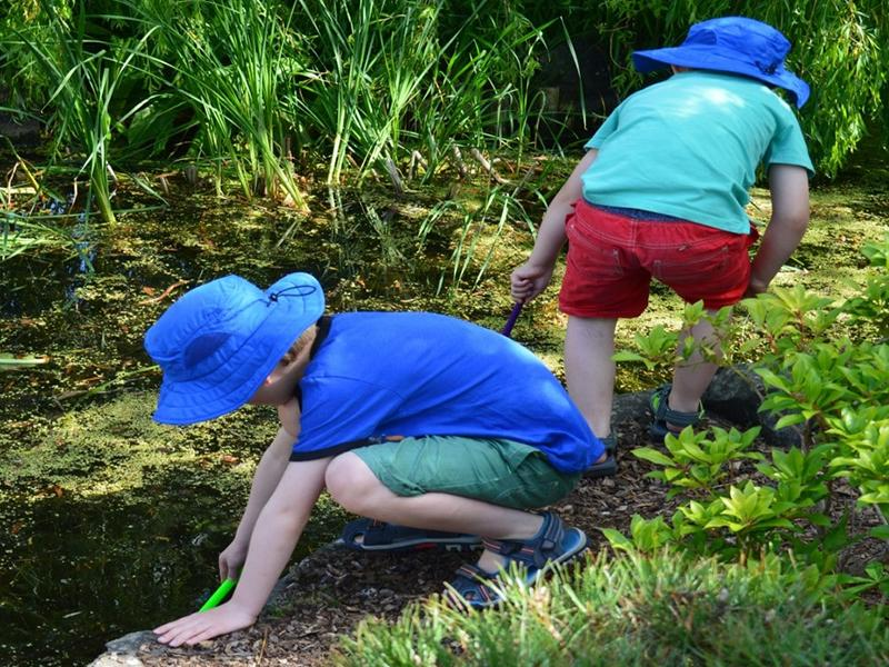 Family Craft: Pond life - Pond Dipping